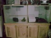 Large tanks for snakes / lizards x2 and stand