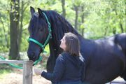 Friesian mare for a great new home