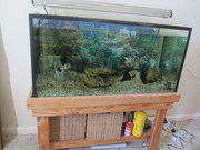Complete Aquarium including one fish