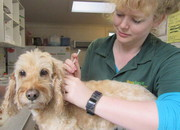 Pet Care Services in Melbourne