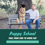 Puppy School Sydney