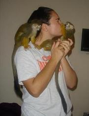 WOW!!!! CUTE BABY CAPUCHIN MONKEYS FOR ADOPTION!!!