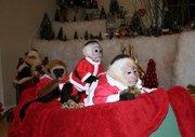 Healthy Intelligent Baby Capuchin Monkeys For Adoption